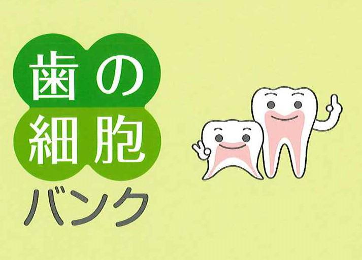 歯髄バンク